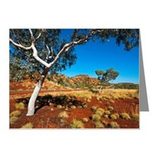 123527838 Note Cards (Pk of 20)
