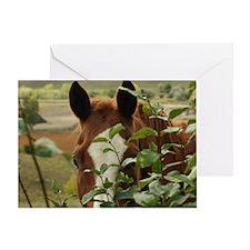 Peek-a-boo horse Greeting Card