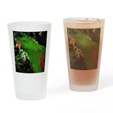 Eclectus Parrot Drinking Glass