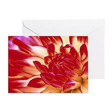 Dahlia flower Greeting Card
