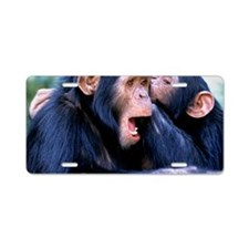 Chimpanzees grooming Aluminum License Plate