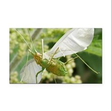 Aphid in flight Rectangle Car Magnet