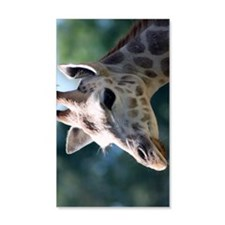 Young Rothschild Giraffe Incredib Wall Decal