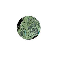 Alga-covered protozoan, SEM Mini Button