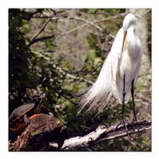 "Egret and Turtle Square Car Magnet 3"" x 3"""