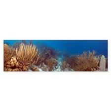 Coral reef Bumper Sticker