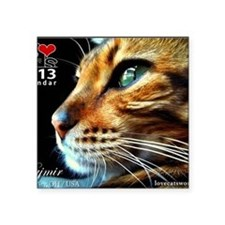 "Cover Bengal Cat Close up Square Sticker 3"" x 3"""