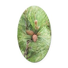 ipadMini_PineCones_1 Oval Car Magnet