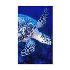 hawkbill sea turtle Decal