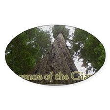 Founder's Tree - Avenue of the Gian Decal