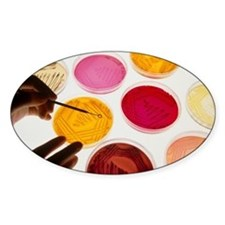 Petri dish bacterial cultures, pick Decal