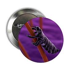 "Head louse, artwork 2.25"" Button"