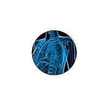 Female anatomy, artwork Mini Button