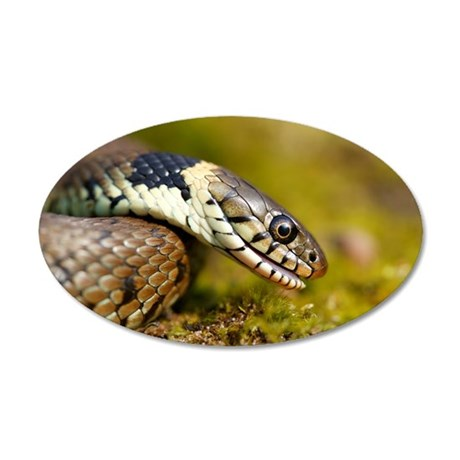 Grass snake 35x21 Oval Wall Decal