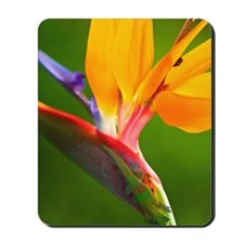 Bird of Paradise Flower #1 Mousepad