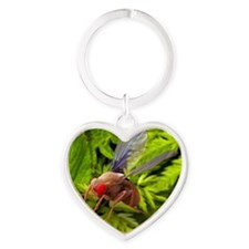 Fruit fly, SEM Heart Keychain