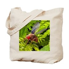 Fruit fly, SEM Tote Bag