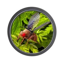 Fruit fly, SEM Wall Clock