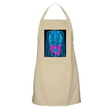 Healthy large intestines, artwork Apron