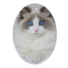 Ragdoll Kitten Oval Ornament
