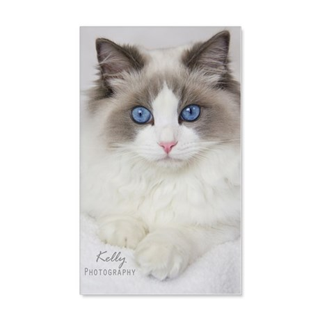 Ragdoll Kitten 20x12 Wall Decal