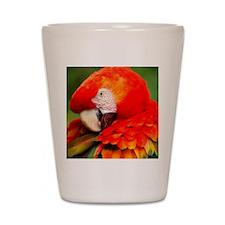 Scarlet Macaw Shot Glass