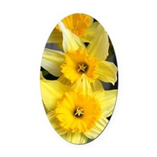 Daffs in a line Oval Car Magnet