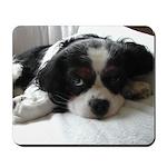 Cocker Spaniel Puppy Face Mousepad