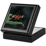 Beautiful Butterfly Keepsake Box