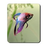 Beta Fish Mousepad