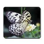 Zebra Butterfly Mousepad