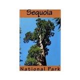 Sequoia National Park (Vertic Rectangle Magnet