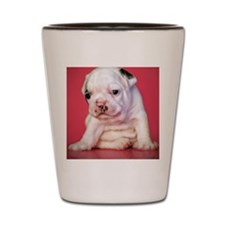 Close up of white bulldog puppy sitting Shot Glass