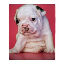 Close up of white bulldog puppy sitt Throw Blanket