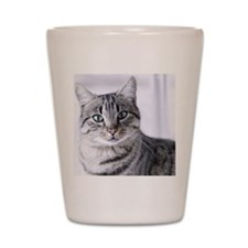 Tabby gray cat and green eyes. Shot Glass