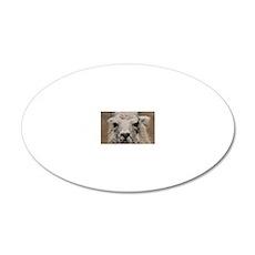 (21) Llama 8716 20x12 Oval Wall Decal