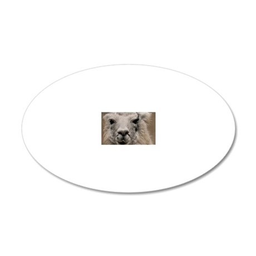 (8) Llama 8716 20x12 Oval Wall Decal