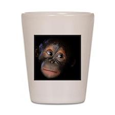 Orangutan Shot Glass