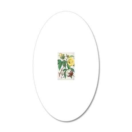Pima cotton flowers, 19th ce 20x12 Oval Wall Decal