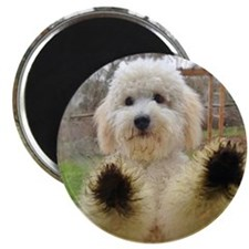Goldendoodle Puppy Dog Magnet