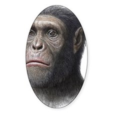 Australopithecus sediba head Decal