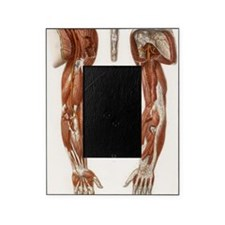 Arm anatomy, historical artwork Picture Frame