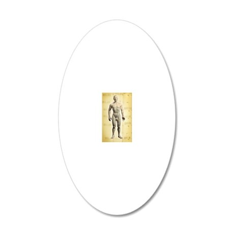 Chinese acupuncture model 20x12 Oval Wall Decal