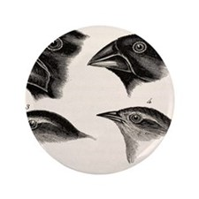 "Darwin's Galapagos Finches 3.5"" Button"