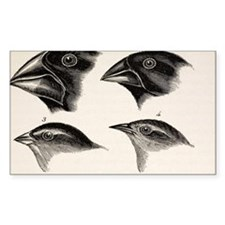 Darwin's Galapagos Finches Decal
