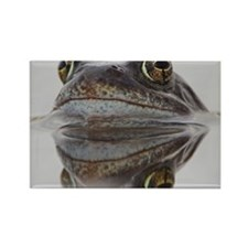 Common frog spawning Rectangle Magnet