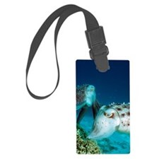 Broadclub cuttlefish laying eggs Luggage Tag