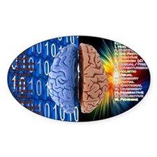 Left Right Brain Decal