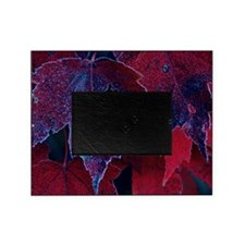 Close-up of frosted red maple autumn Picture Frame