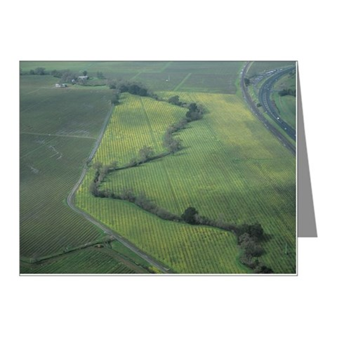 Bare wine vines with highway Note Cards (Pk of 10)